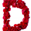 Alphabet D made from red rose — Stock Photo