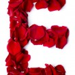 Alphabet E made from red rose — Stockfoto