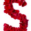 Alphabet S made from red rose — Stock Photo