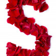 Alphabet S made from red rose - Stock fotografie