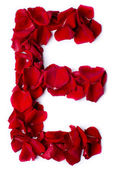 Abeceda e z červené růže — Stock fotografie