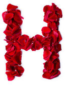 Alphabet H made from red rose — Stock Photo