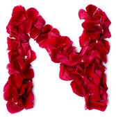 Alphabet N made from red rose — Stock Photo