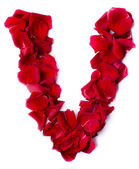 Alphabet V made from red rose — Stock Photo