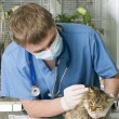 Royalty-Free Stock Photo: Wounded cat treated by veterinarian