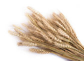 Wheat ears isolated on white — Stock Photo