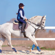 The horsewoman on a white horse — Stock Photo