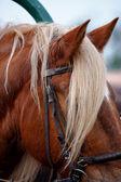 Utnyttjas hästen — Stockfoto