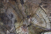 Tree trunk cut — Stockfoto