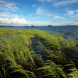 Stockfoto: Water landscape