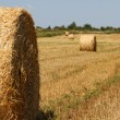 Hay bales — Stock Photo #12371631