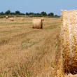 Hay bales — Stock Photo #12371642