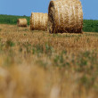 Hay bales — Stock Photo #12371663
