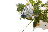White butterfly — Stockfoto