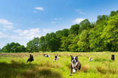 Happy dogs romping in a field — Stockfoto