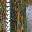 Stock Photo: Water level meter after low rainfall