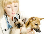 Veterinarian with two animals — Stock Photo