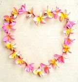 Hjärta form av rosa plumeria — Stockfoto