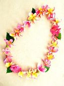 Pink plumeria lei — Stock Photo