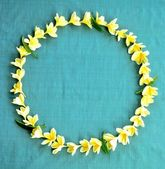 Yellow plumeria lei on sky blue background — Stock Photo