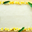Stock Photo: Frame of yellow plumeria
