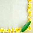 Frame of yellow plumeria — Stock Photo