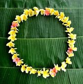 Plumeria lei on banana leaf — Stock Photo
