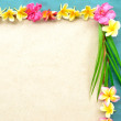 Frame of colorful plumeria with coconut leaf — Stock Photo
