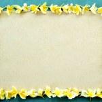 Frame of yellow plumeria on sky blue background — Stock Photo #11818640