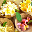 Tropical flowers from Bali island - Stock Photo