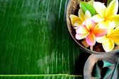 Plumeria with incense — Stock Photo