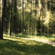 Green forest — Stock Photo #11092798