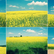 Landscape set — Stock Photo