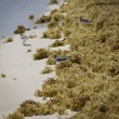 Stock Photo: Sandpiper at beach