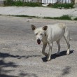 Mexican stray — Stock Photo #12097687