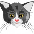 Cat  head — Stock Vector