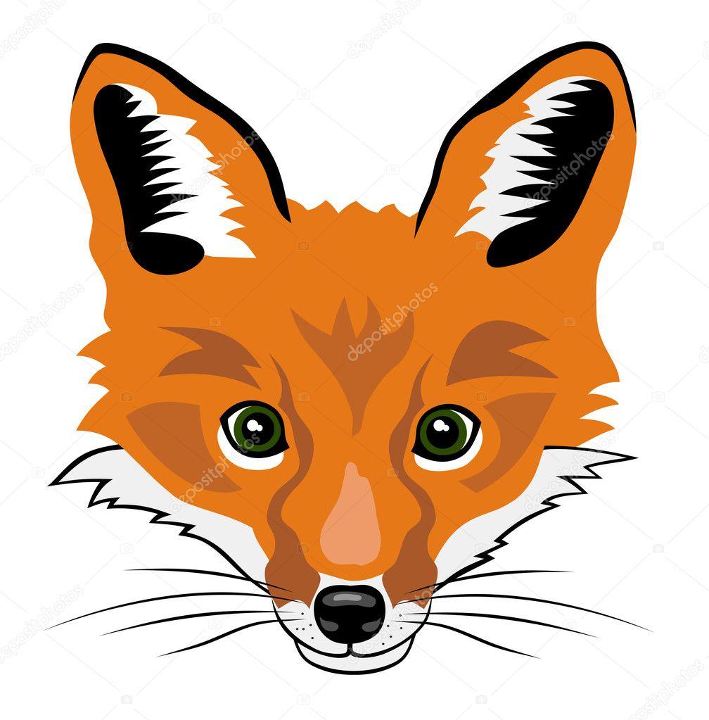 Illustration of fox head  Fox Head Illustration