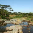 River - Serengeti Safari, Tanzania, Africa — Stock Photo