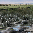 Water Hole - Ngorongoro Crater, Tanzania, Africa - Stock Photo