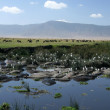 Water Hole - Ngorongoro Crater, Tanzania, Africa — Stock Photo #11347256