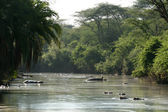 River - Serengeti Safari, Tanzania, Africa — Stock Photo