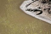 Crocodille - Serengeti Safari, Tanzania, Africa — Stock Photo