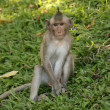 Monkey - Wat Phnom, Phnom Penh, Cambodia — Stock Photo #11432810