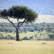 The Great Rift Valley - Maasai Mara - Kenya — Stock Photo