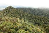 Brinchang Mountain, Cameron Highlands, Malaysia — Stock Photo