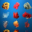 Atoll Reef - Ocean Park, Hong Kong — Stock Photo