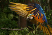 Parrot - Ocean Park, Hong Kong — Stock Photo