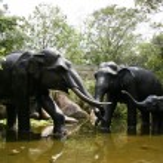 Elephant Statues - Singapore Zoo, Singapore — Stock Photo