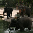 Elephant Show - Singapore Zoo, Singapore — Stock Photo #11568640