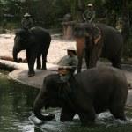 Elephant Show - Singapore Zoo, Singapore — Stock Photo #11568640